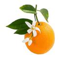 arancio dolce