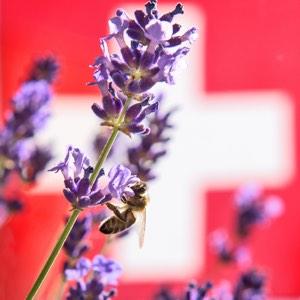 Olio 31 Svizzera